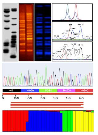 DNA fingerprint barcoding