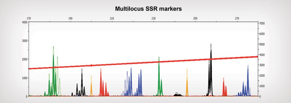 Multilocus SSR markers
