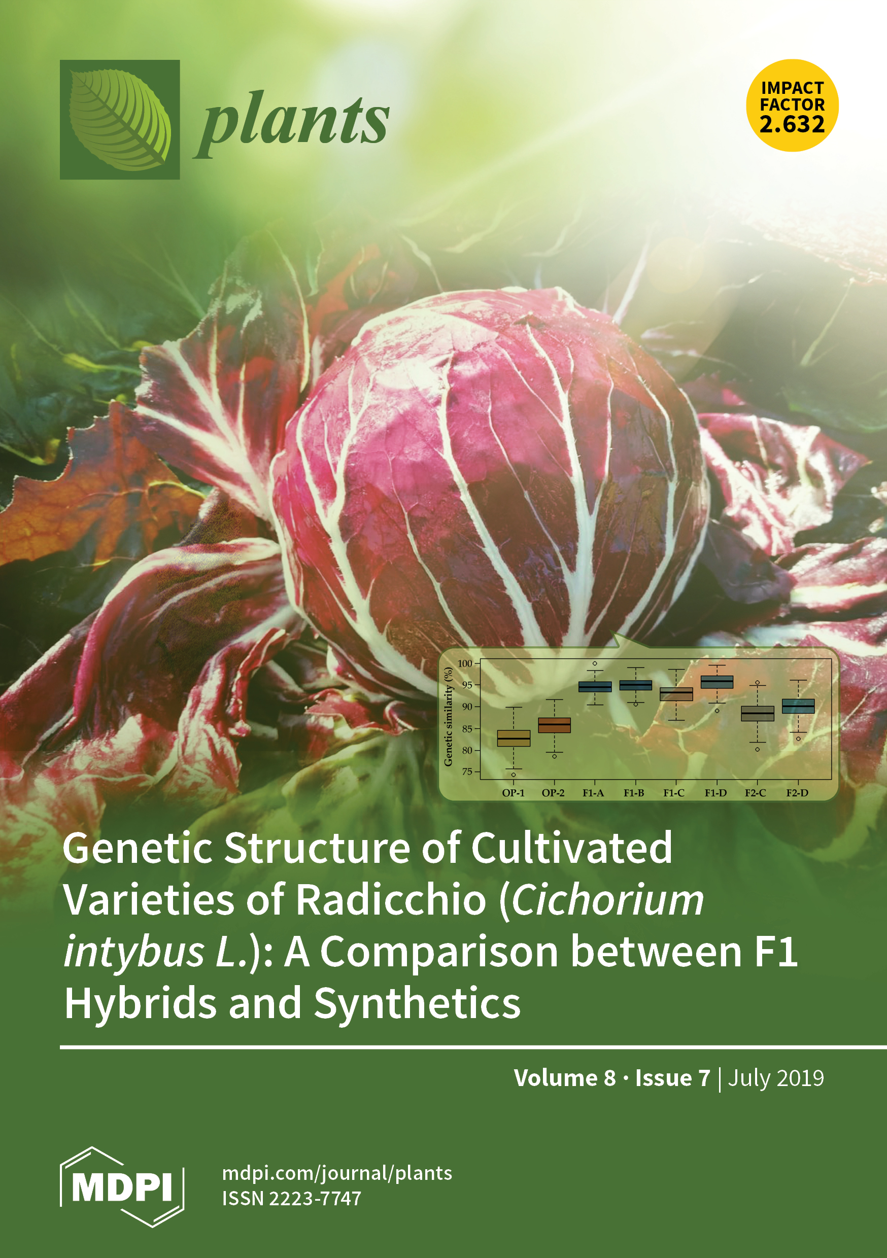 Genetic Structure of Cultivated Varieties of Radicchio (Cichorium intybus L.): A Comparison between F1 Hybrids and Synthetics